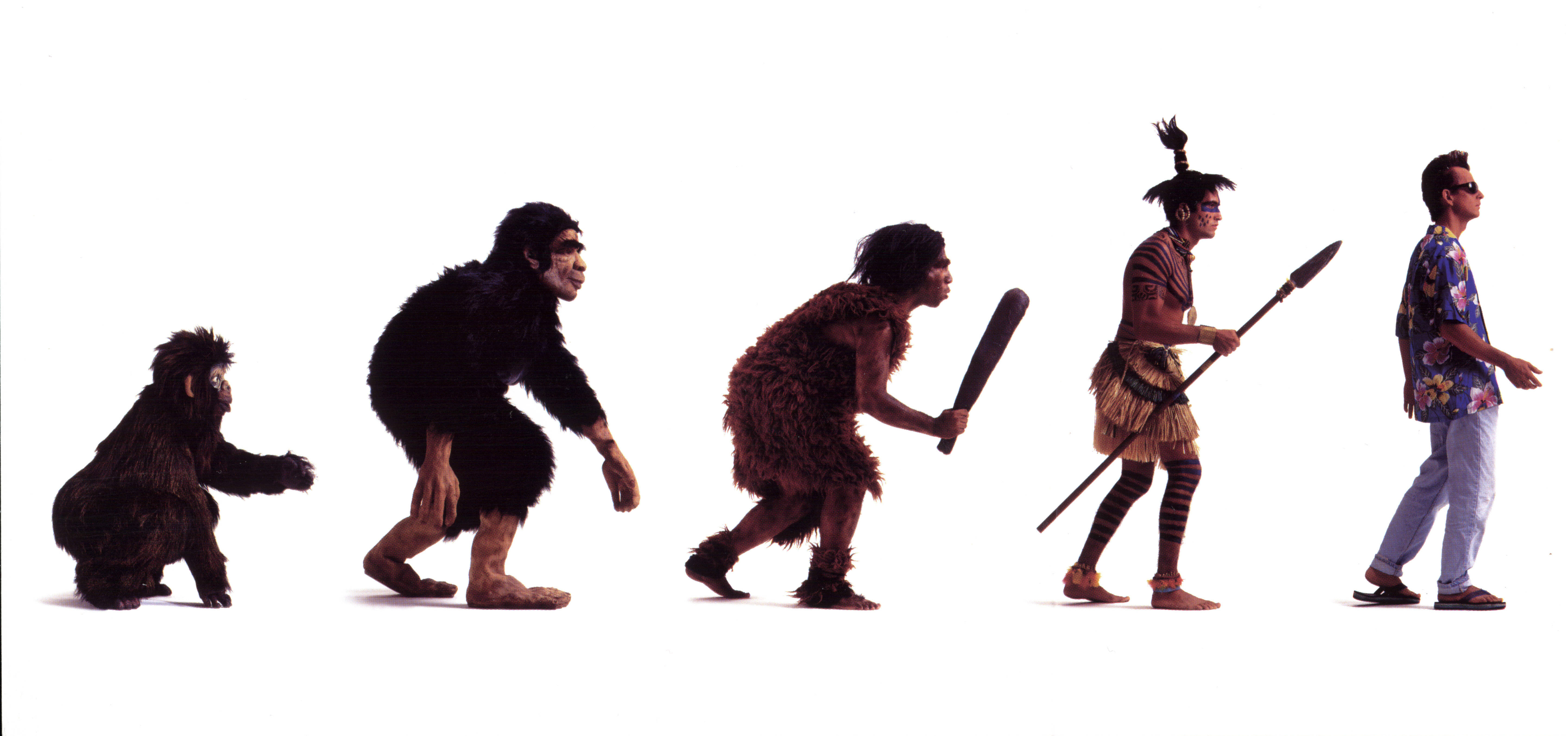 evolution in islam